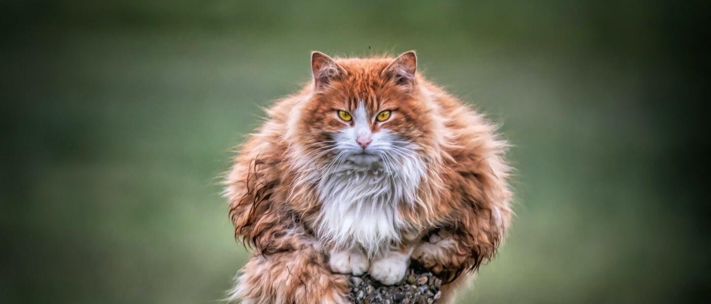 Grumpiness Wignall Grumpy