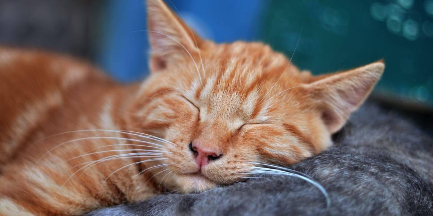 7 habits good sleepers wignall